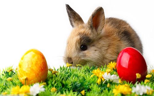 uova pasqua coniglio pasqua alimentazione